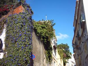 an image named reisen/2009lisbon_images/01_flowers.jpg